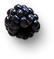 berry8.png